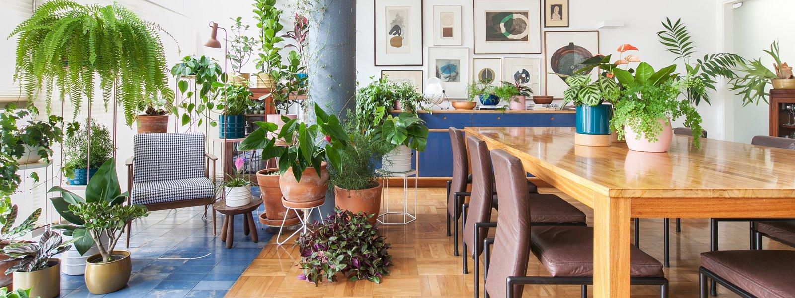 banner capa interna decoracao plantas dentro de casa historias de casa.jpg?resize=1200,630 - 10 plantas que vão bem em casa e apartamento: viver com estilo nunca foi tão fácil - e verde!