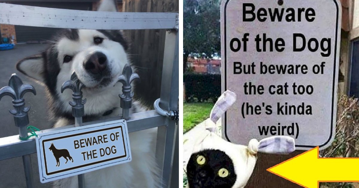 "beware of dogs.jpg?resize=1308,572 - 10+ Dangerous Photos of ""Be Aware of Dogs"" Signs"