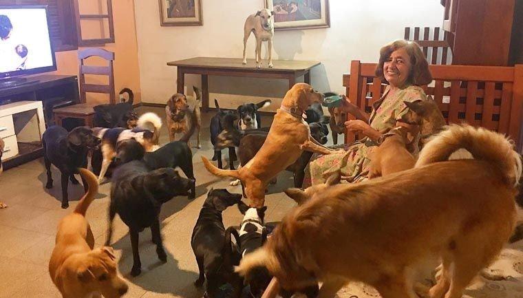 caes4.jpg?resize=300,169 - O amor de 37 cães ajudaram essa senhora a vencer a depressão