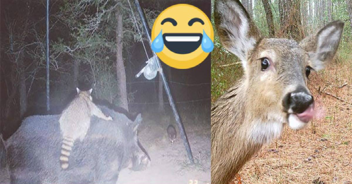 cam animal.jpg?resize=636,358 - 30 Hidden Cam Pictures Reveal The Secret Life Of Animals When We're Not Looking