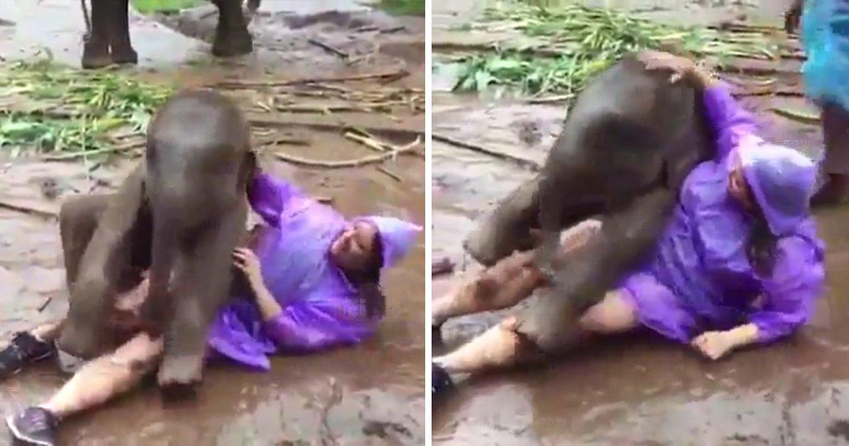 capa00qaad.png?resize=300,169 - Vídeo adorável mostra um elefante bebê brincando com uma mulher