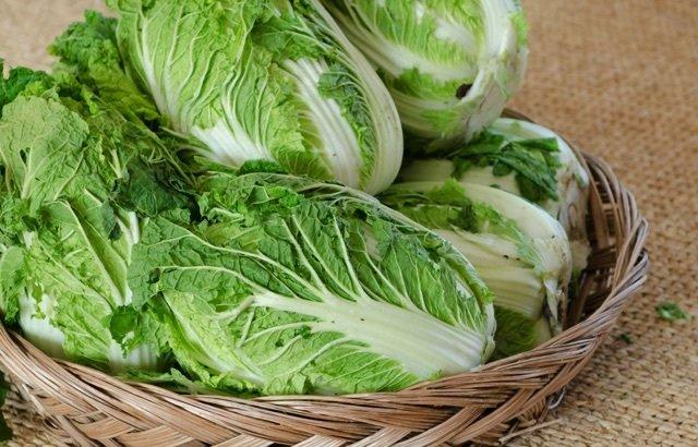 白菜 見分け方에 대한 이미지 검색결과
