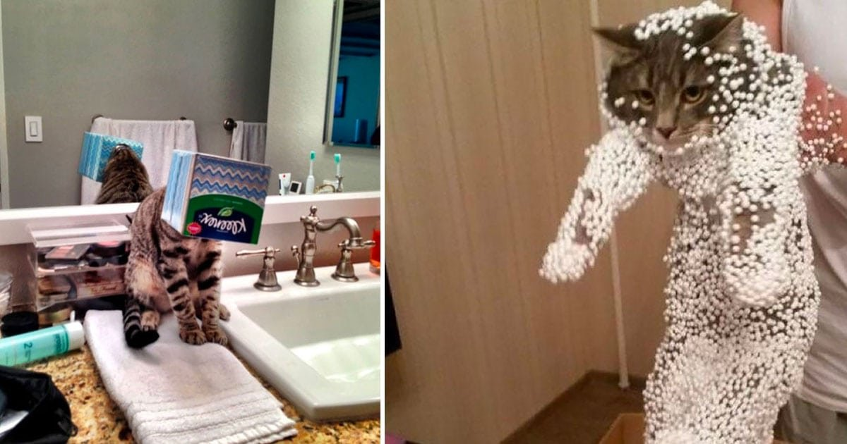cat horrible mistakes photos featured.jpg?resize=636,358 - 45+ Hilarious Cat Photos After They Made Horrid Mistakes