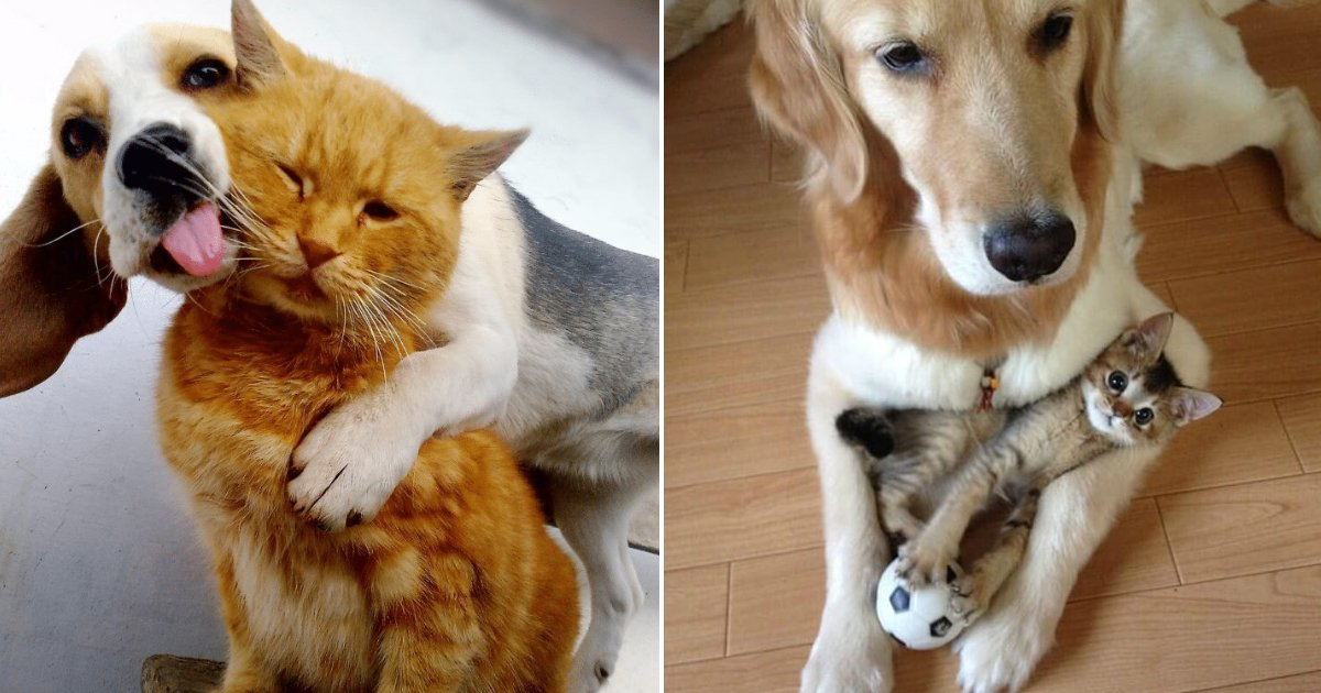 cats and dogs.jpg?resize=636,358 - Who Said Dogs & Cats Don't Get Along? Here's Proof That Different Species Can Be Best Friends