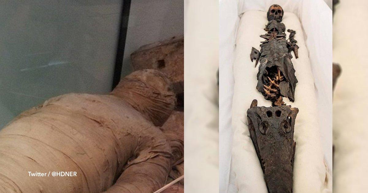 cov 1 6.png?resize=300,169 - Exponen por primera vez al público a una momia con cabeza de niña y de cocodrilo