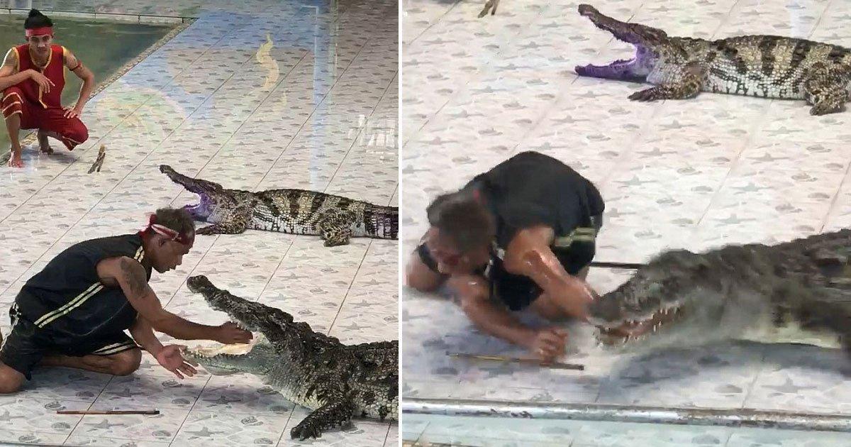 crocodile attacked handler.jpg?resize=648,365 - [Vidéo] Un dompteur est attaqué par un crocodile en plein spectacle.