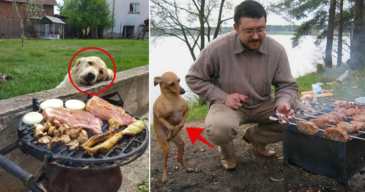 dog 11.jpg?resize=1200,630 - 10+ Hilarious Photos Of Dogs Begging For Food