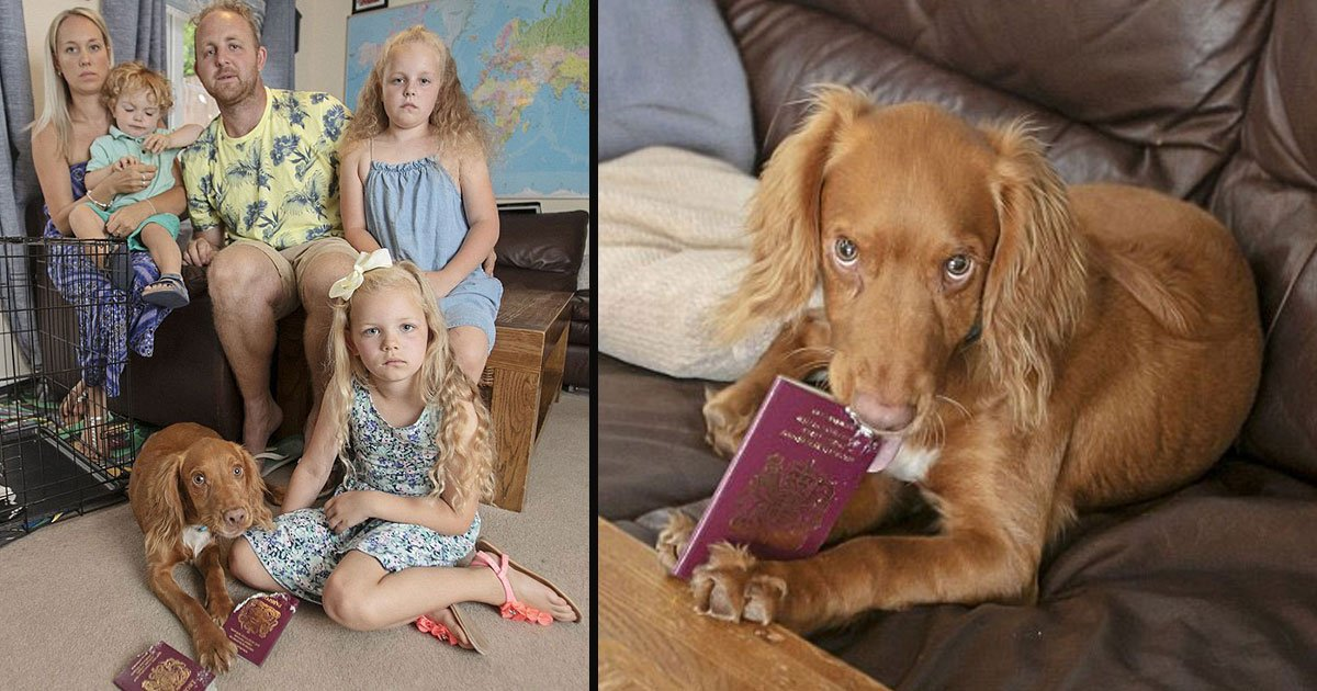 dog passport tore holiday 5.jpg?resize=412,275 - Naughty Dog Munched Kids' Passports And Family Had To Cancel Expensive Majorca Holiday
