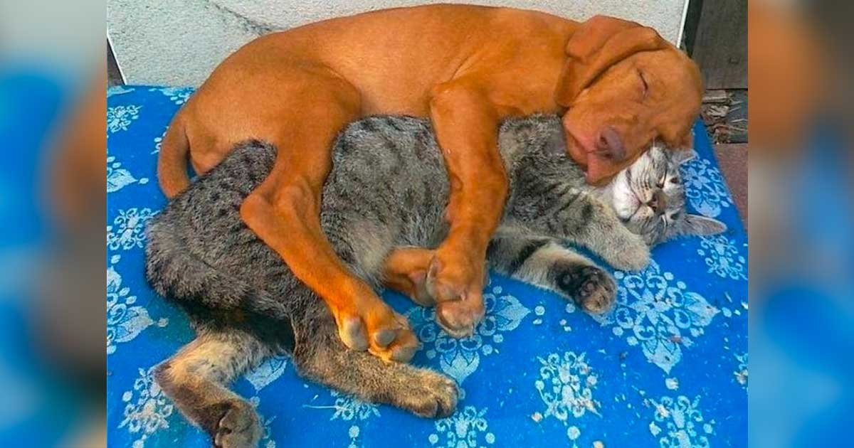 dog cats cuddle featured.jpg?resize=1200,630 - 40 Cats And Dogs That Prove You Don't Need To Be The Same Species To Be Best Friends