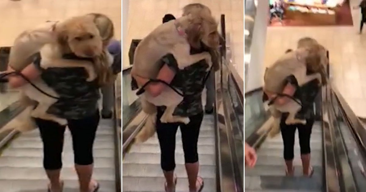 doggg.jpg?resize=412,232 - The Video Of Scared Labradoodle Holding His Owner Tightly As He Is Afraid To Step On The Escalator Is Too Adorable To See