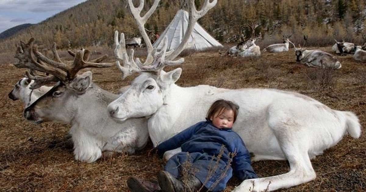 dukha mongolian reindeer tribe featured.jpg?resize=636,358 - Photographer Captures Stunning Photos Of Lost Mongolian Tribe Including Their Life And Culture