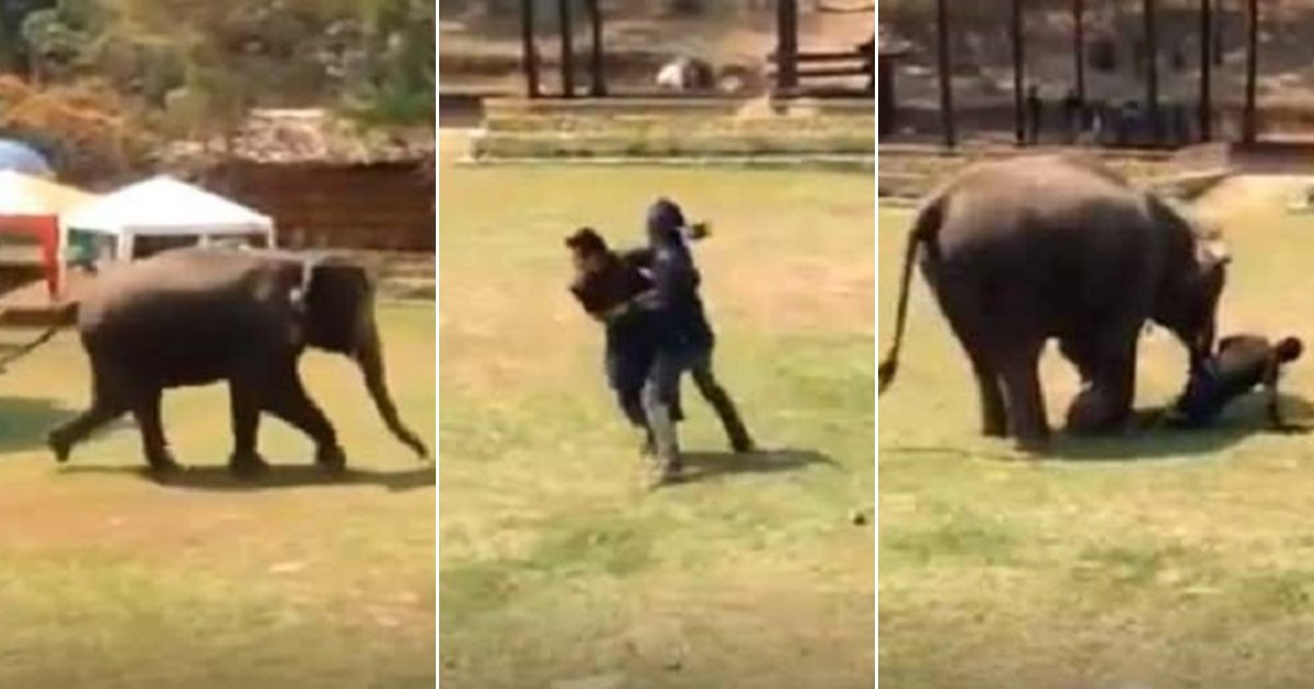 e3 side.jpg?resize=412,275 - Elephant Saw Her Caretaker 'Fighting' And Rushed To Save Him—She Even Stopped To Check If He's Okay