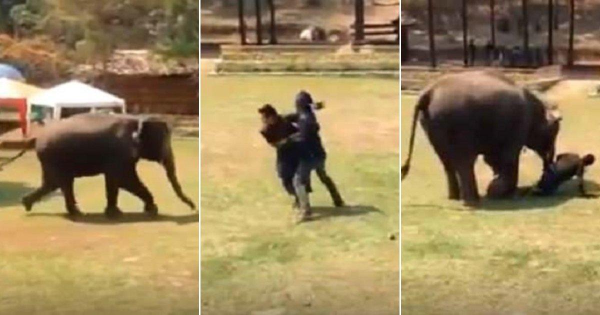 """e3 side.jpg?resize=648,365 - Elefante ve que su cuidador """"está luchando"""" y se apresura para salvarlo: incluso se detiene para verificar si está bien"""