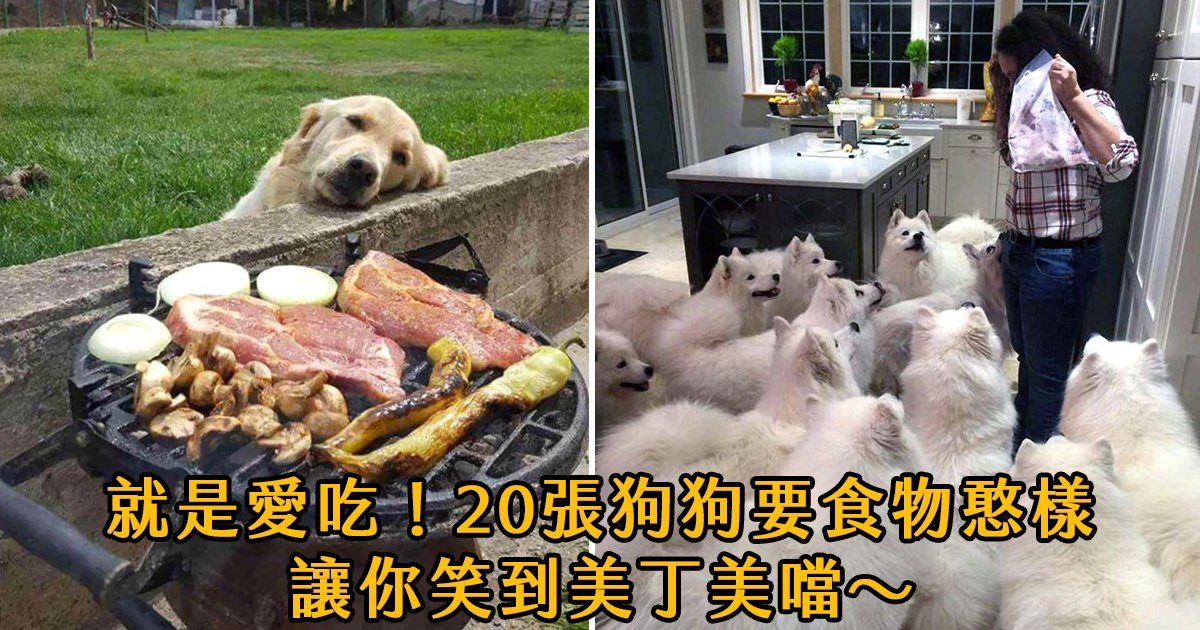 e69caae591bde5908d 1 8.png?resize=1200,630 - 「一口就好...?」20張狗狗要食物的真面目大露出,看到第11張我笑瘋