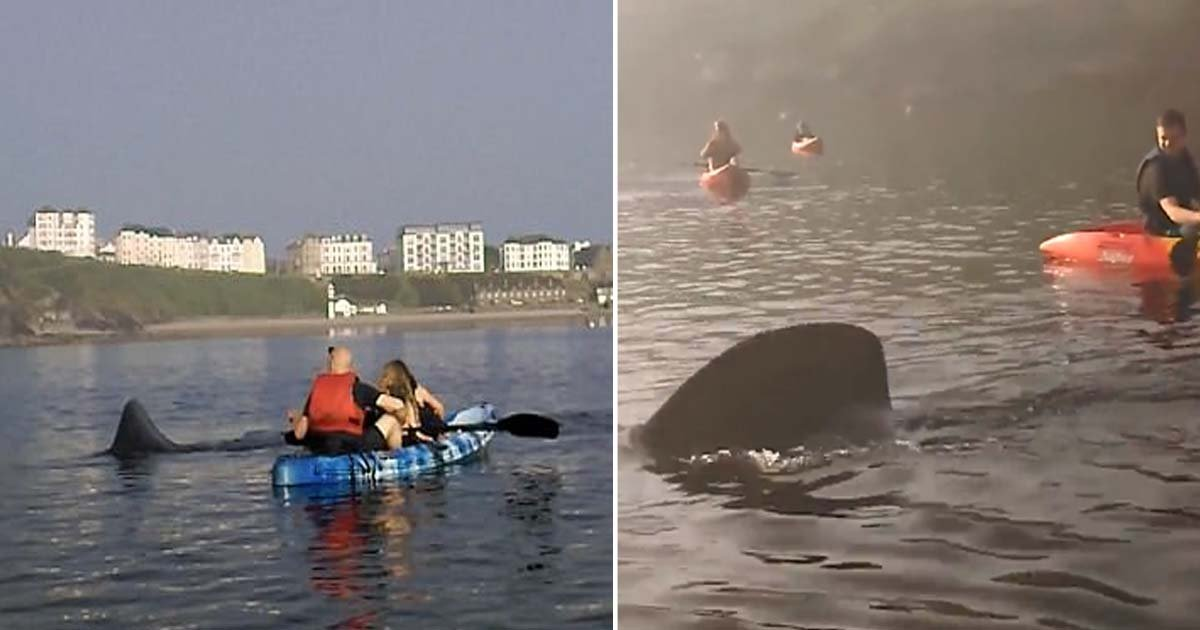 ebacb4eca09c 2 ebb3b5ec82ac 1.jpg?resize=636,358 - Giant Basking Shark Swims Around Kayak For 2 Hours As The People On It Silently Watch The Gentle Creature