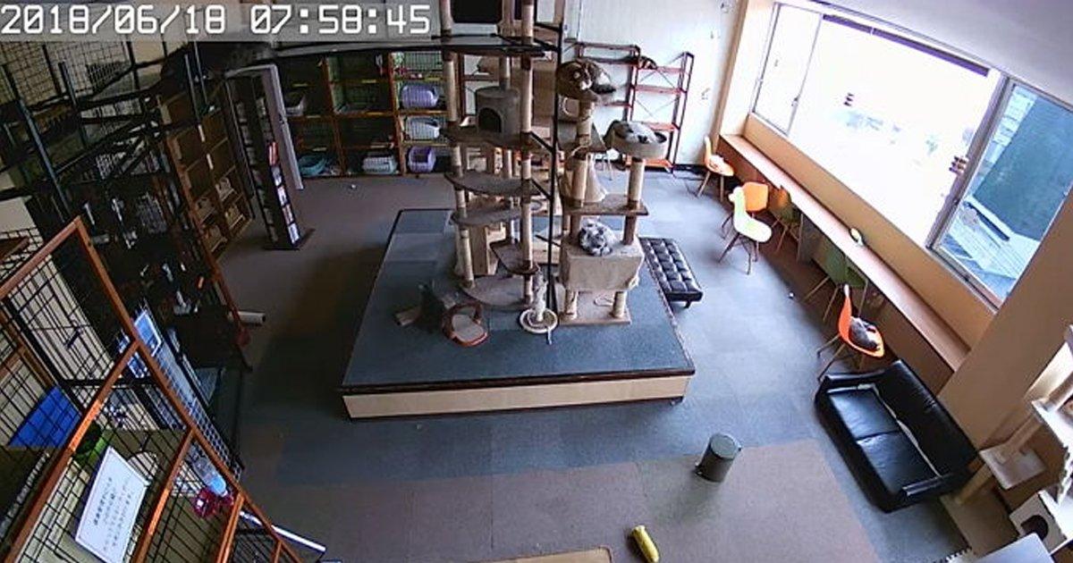 ecbaa3ecb9b4ed8e98.jpg?resize=648,365 - '지진 발생 직전' ... CCTV에 포착된 고양이들의 '놀라운' 반응 (영상)