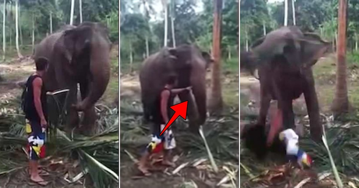 ele 1.jpg?resize=636,358 - Elephant Smashes Tourist To The Ground By Its Trunk When He Tries To Pet It
