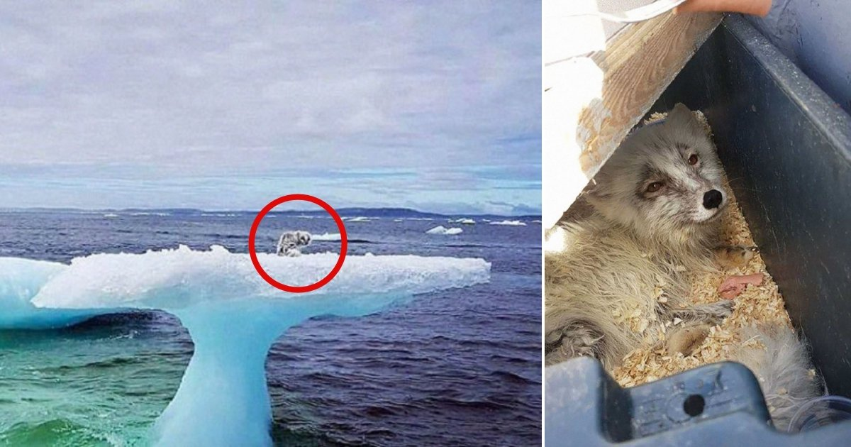 f2 side.jpg?resize=636,358 - Encounter With An Iceberg Turns Into Extraordinary Rescue When Fishermen Realize What's On Top