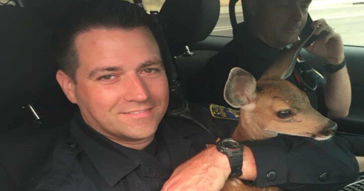 fawn with officer 1.jpg?resize=300,169 - Un moment de tendresse entre un pompier et un faon sauvé des flammes