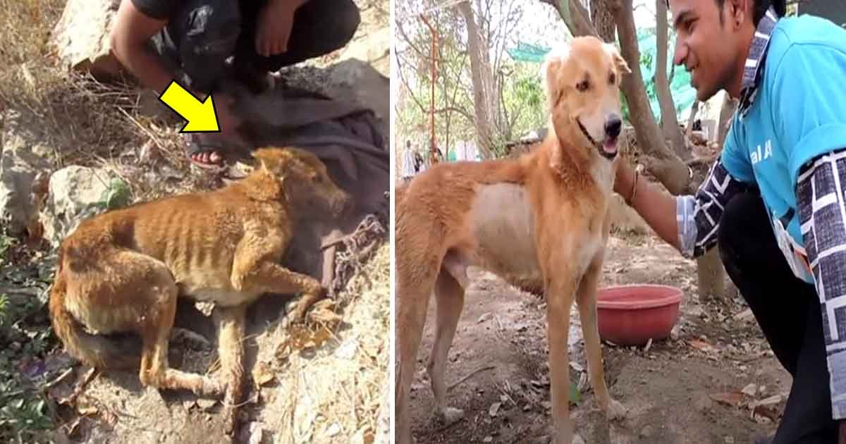 gag.jpg?resize=1200,630 - A Dog, Hit By A Train, Has No Hope For Survival. But The Rescuers' Whole-hearted Determination Led To His Recovery