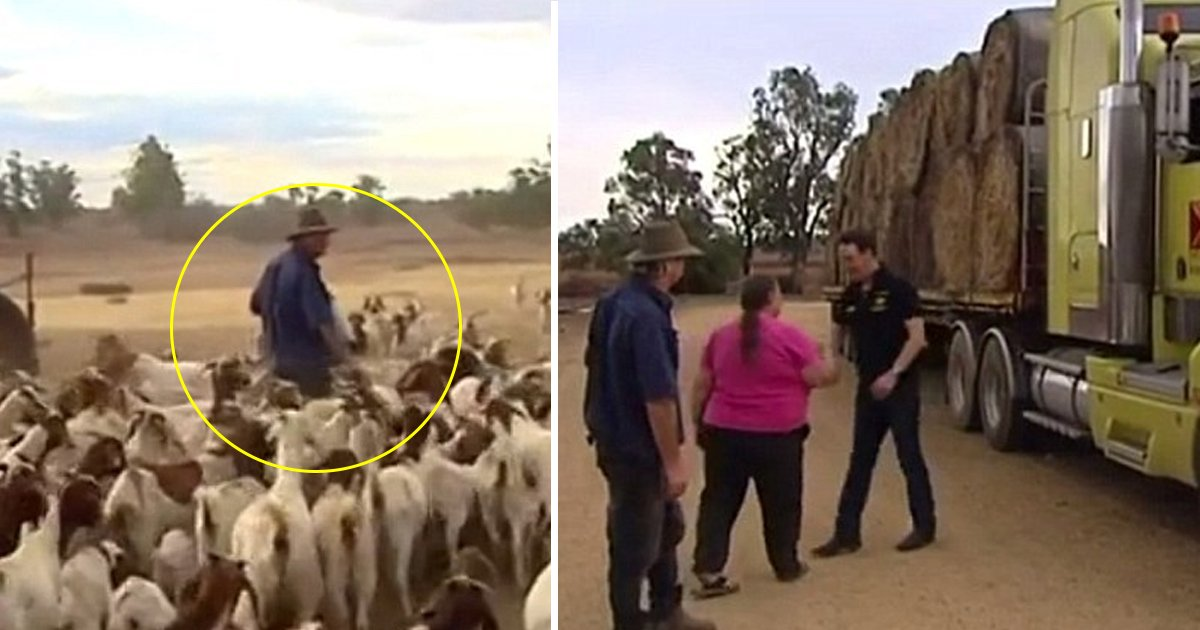 gagaget.jpg?resize=1200,630 - Australian Farmer About To Shoot His Flock Of 1200 Sheep Gets Emotional After Receiving A Last-minute Donation From Strangers
