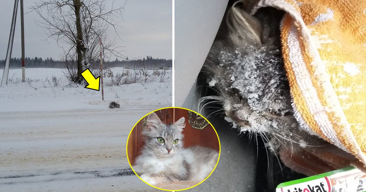 gagg.jpg?resize=1200,630 - Driver Saves a Freezing Kitten From -1 Degree Fahrenheit Snow Storm