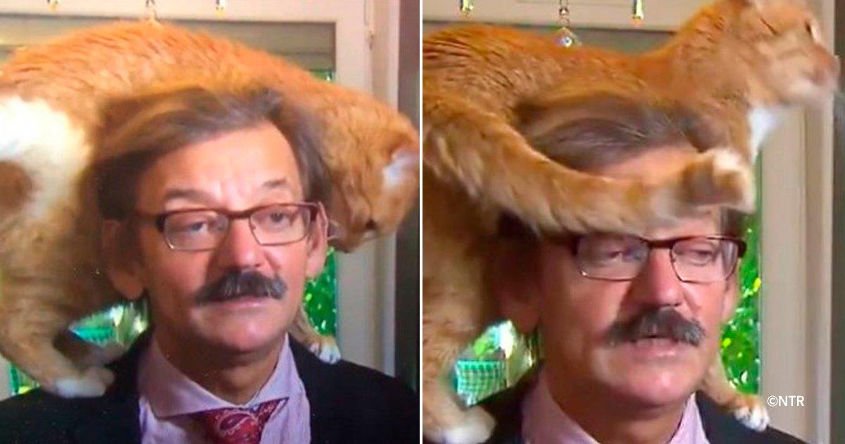 gatosn.jpg?resize=300,169 - Este gato se roba la atención durante una entrevista en vivo por TV de un académico polaco