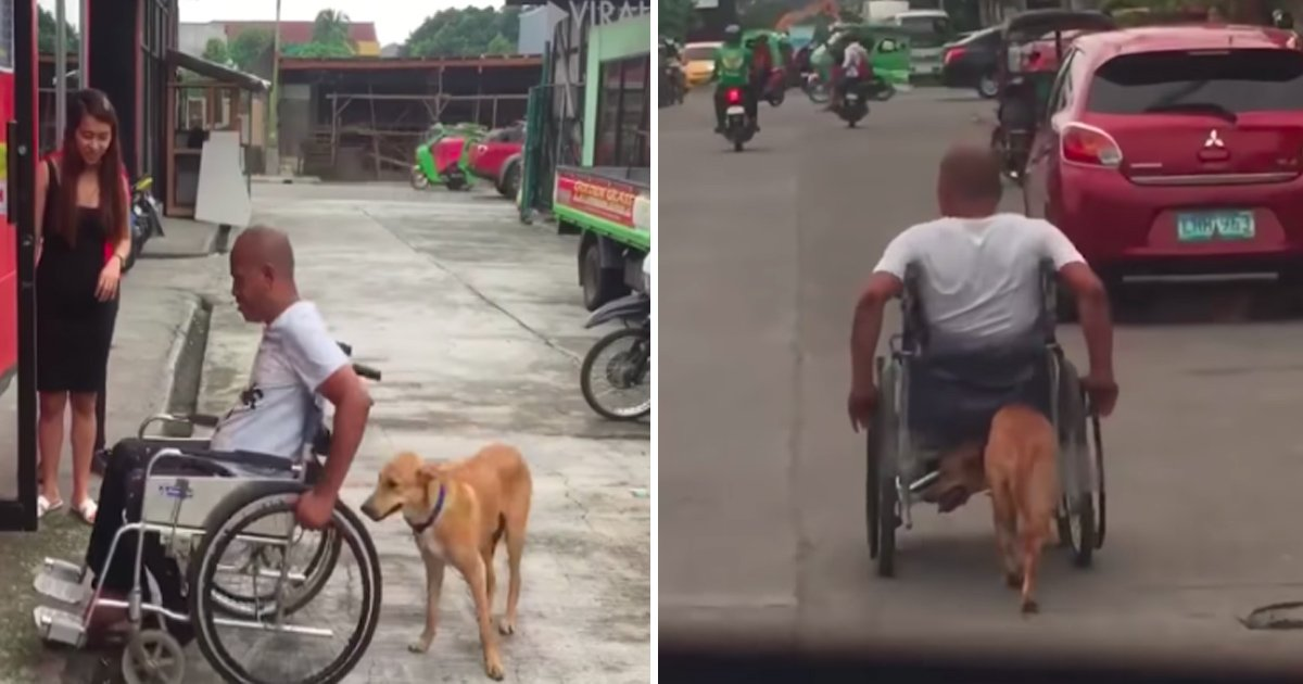 ghaa.jpg?resize=636,358 - People Over The Internet Are Touched Seeing A Dog Pushing His Master On A Wheelchair