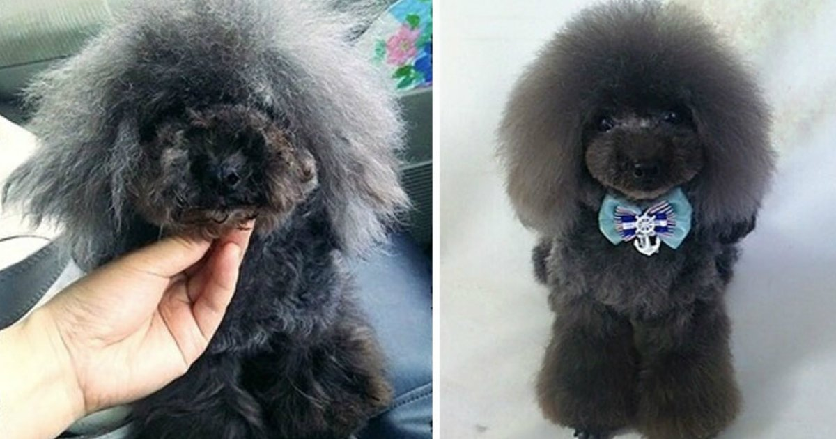 grooming.jpg?resize=636,358 - This Pet Groomer Transforms Dogs In The Most Incredible Way, Find Out All Of His Work!