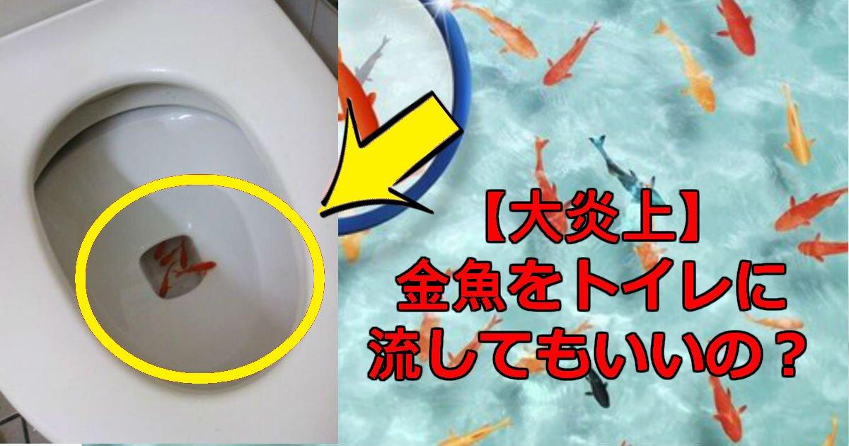 gyo.jpg?resize=1200,630 - 金魚をトイレに流す動画&りにゃボコの顔画像アリ!下水処理の仕組み解説