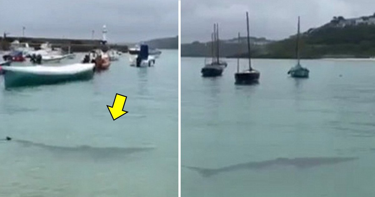 hahaha.jpg?resize=636,358 - Cornwall Public Advised To Stay Ashore After A 9-feet Long Shark Invades The St Ives Harbor