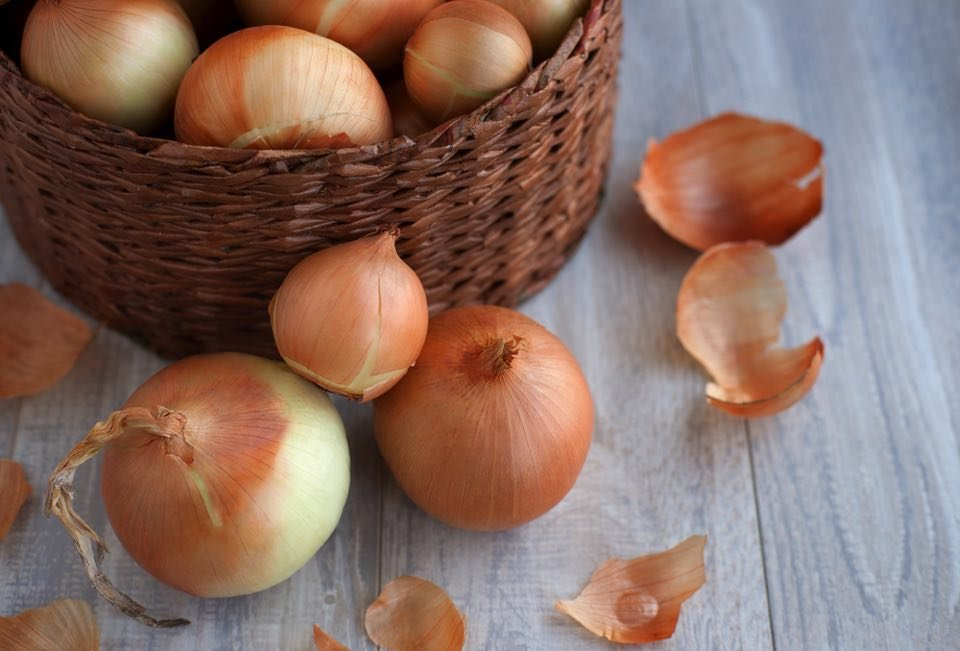 玉ねぎ 保存方法 段ボール에 대한 이미지 검색결과
