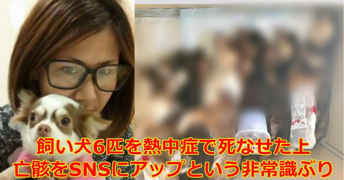 koyanagi.png?resize=412,232 - 【閲覧注意】「あなまろ家族」飼い主が熱中症死させたチワワ6匹をFacebookに上げ大炎上!