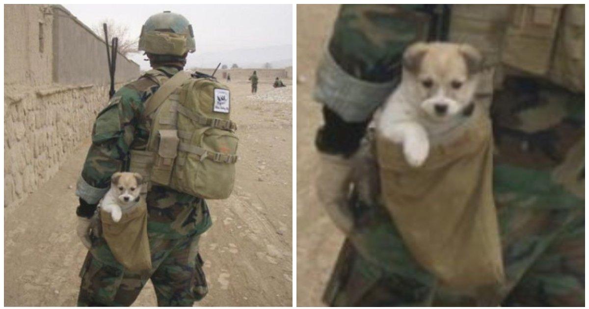 layout 2018 7 12 3.jpg?resize=648,365 - 폭탄 터지는 상황에서 구출한 '새끼 강아지'를 가방에 쏙 넣고 대피한 군인