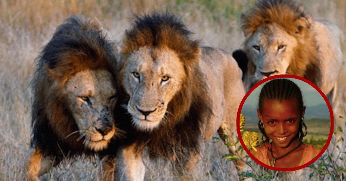 lions save girl.jpg?resize=412,232 - 3 Lions interviennent pour sauver la vie d'une fille de 12 ans kidnappée pour un mariage forcé;