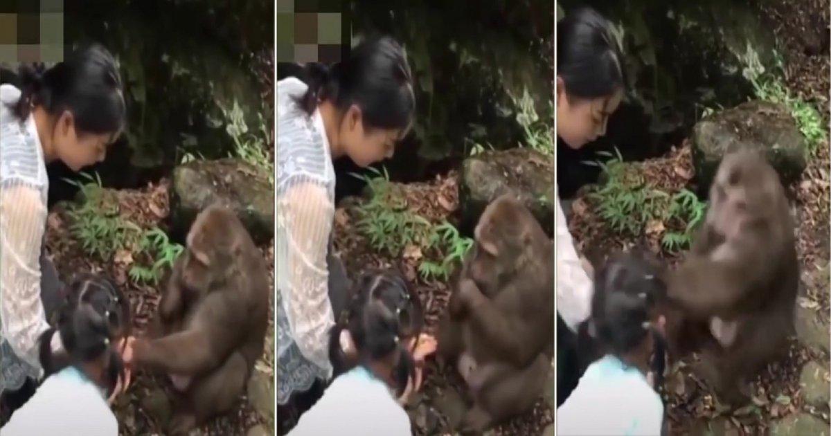 m 1.jpg?resize=300,169 - Une petite fille se moque d'un singe avec de la nourriture alors il se venge en la frappant dans le visage!