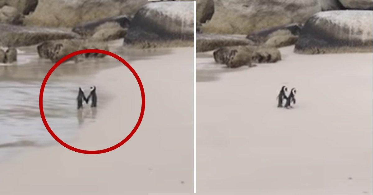 penguins.jpg?resize=412,275 - Des Pingouins se tiennent la main lors d'une balade romantique sur la plage