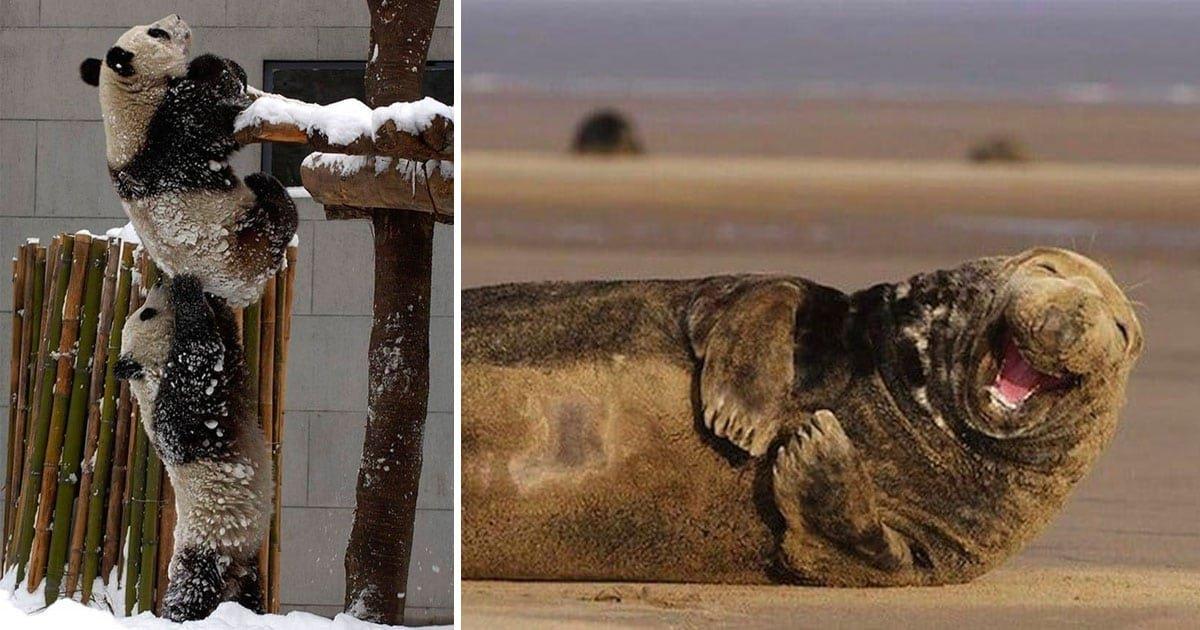 perfectly timed animal photos featured.jpg?resize=412,232 - Plus de 40 superbes photos d'animaux ont été prises au bon moment.