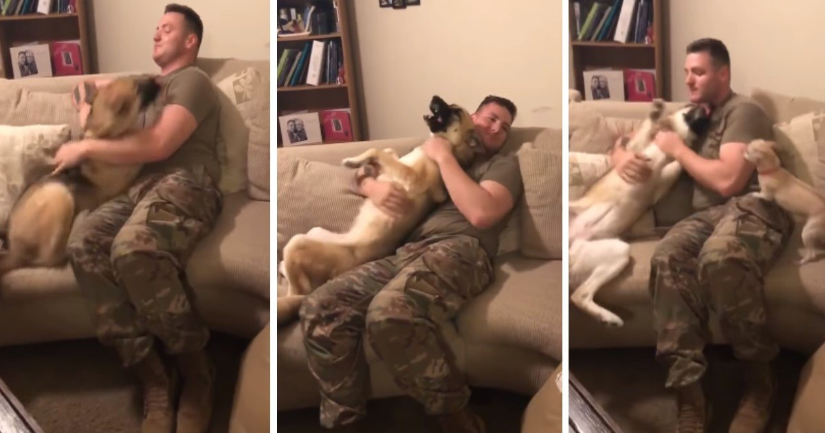 pic copy 2 1.jpg?resize=636,358 - Adorable Moment German Shepherd Reunites With Her Soldier Daddy After 9 Months