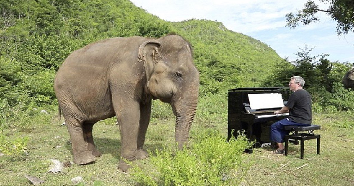 pic copy 2 20.jpg?resize=1200,630 - Incredible Moment Blind Elephant 'Danced' As Man Played Piano To Her