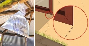 preview 22170210 300x158 97 1525087441.jpg?resize=412,232 - 10 Ways to Make No Insect Raid Into Your Home Ever Again