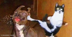 preview 2730010 300x158 97 1531319103.jpg?resize=636,358 - 23 Photos Proving that Cats and Dogs Relationships Are the Hardest