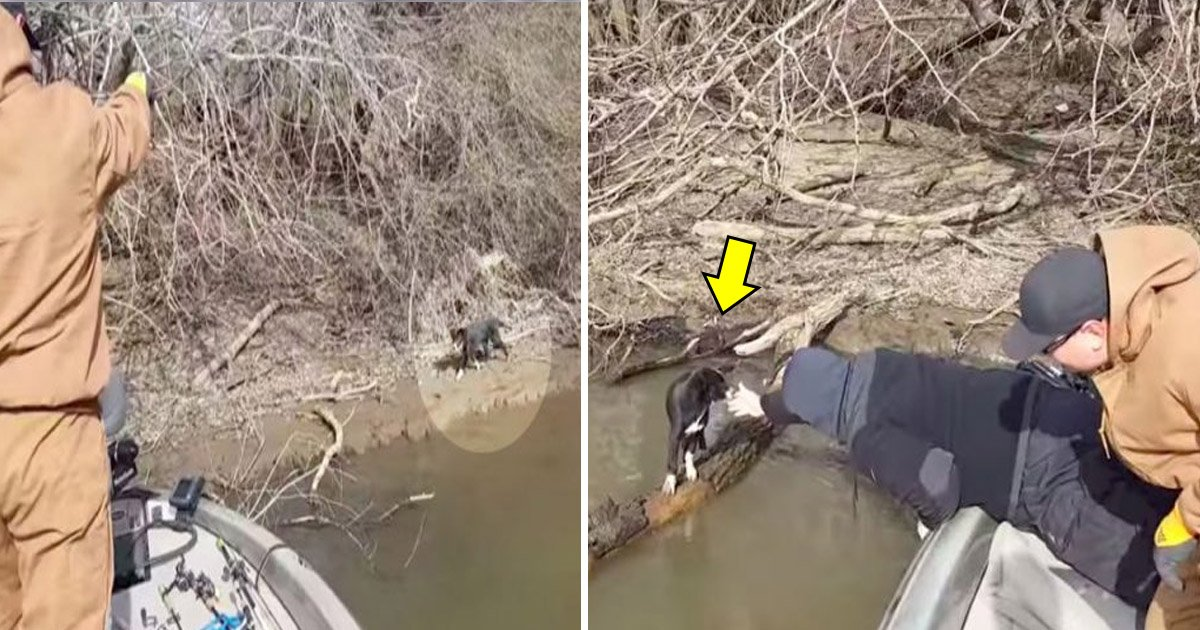 rtat.jpg?resize=1200,630 - Fishermen Rescue A Puppy After They Hear Noises Coming From The Bushes On The Riverbank