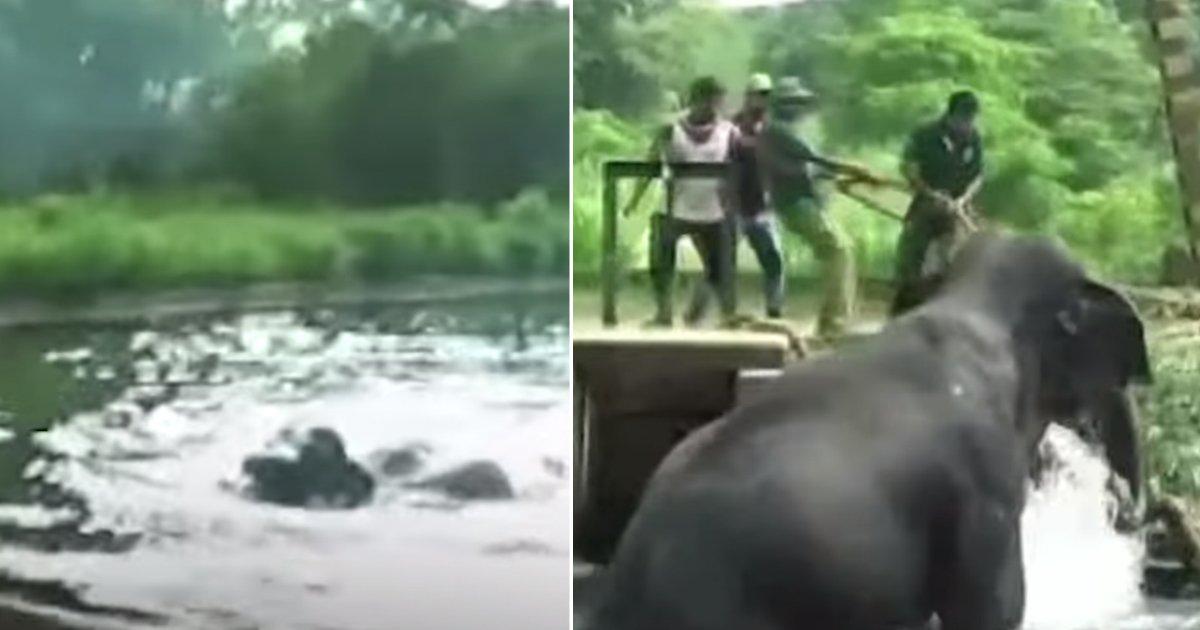 saving elephant.jpg?resize=1200,630 - Un éléphant essaie péniblement de sortir d'un canal pendant des heures, des villageois se sont associés pour sauver l'animal épuisé