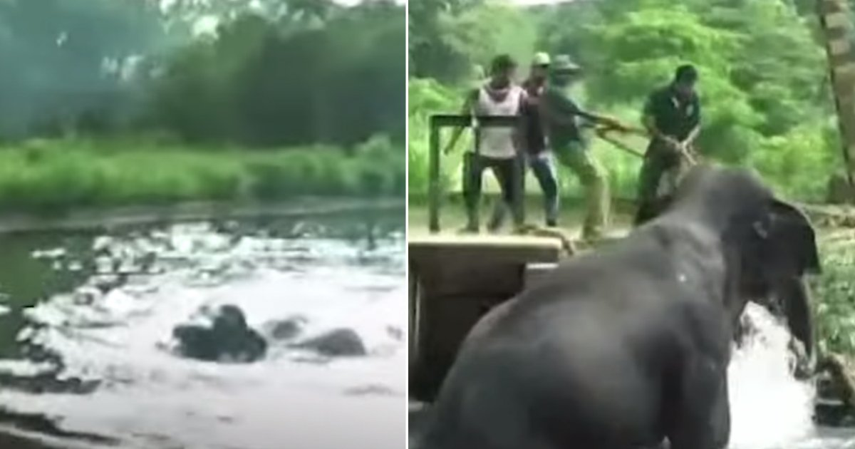 saving elephant.jpg?resize=636,358 - Elephant Struggled To Come Out Of Canal For Hours, Villagers Teamed Up To Save The Exhausted Animal