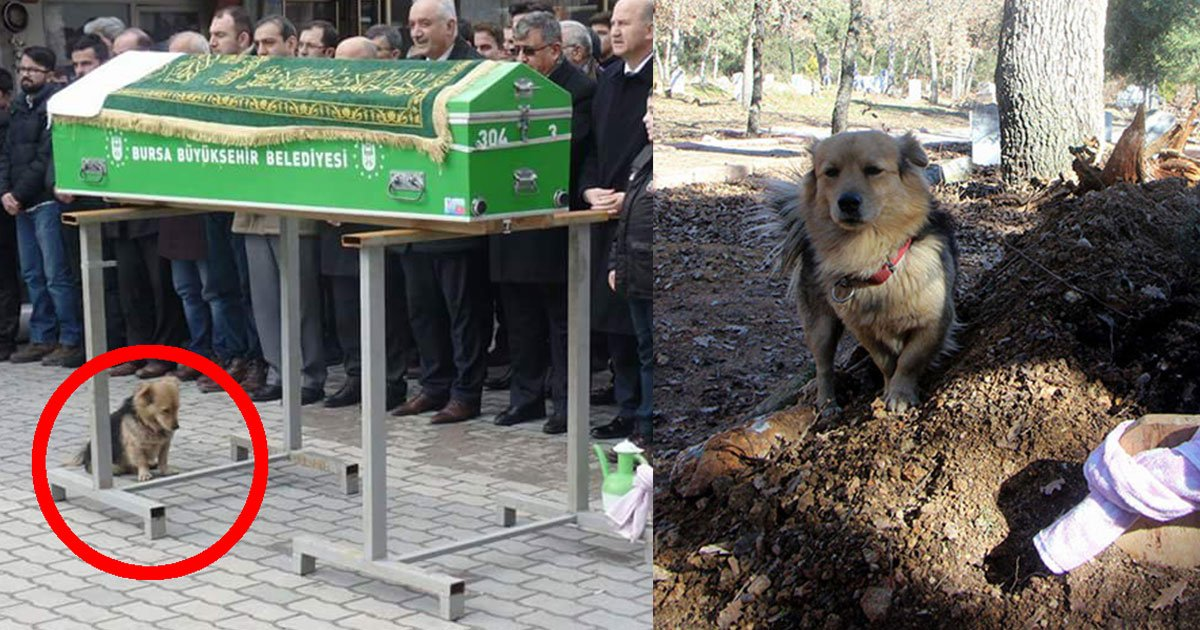 son follows his late fathers loyal dog to see where he goes every morning what he found is really heart touching.jpg?resize=636,358 - Son Follows His Late Father's Dog To See Where He Goes Every Morning—What He Found Is Really Heart Touching