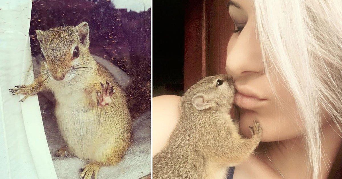 squirrel 1.jpg?resize=1200,630 - Un couple sauve un bébé écureuil d'une mort certaine. Une fois adulte, l'animal les retrouve, et il est venu avec une surprise.
