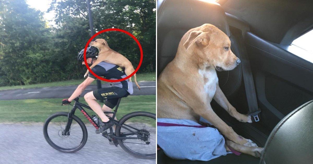 st.jpg?resize=1200,630 - Un cycliste a sauvé un chien errant blessé et l'a porté sur son dos pour aller le soigner