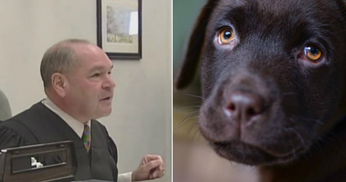 stop abusing animals.jpg?resize=648,365 - Judge Has Enough Of Animal Abusers; He Decides To Give Them A Dose Of Their Own Medicine