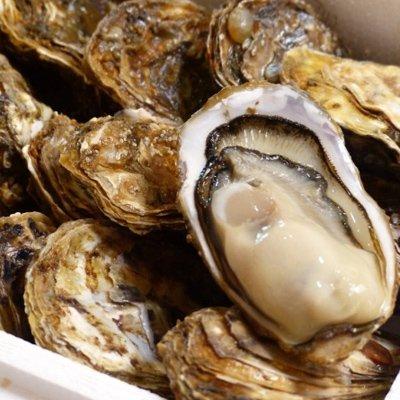 牡蠣에 대한 이미지 검색결과
